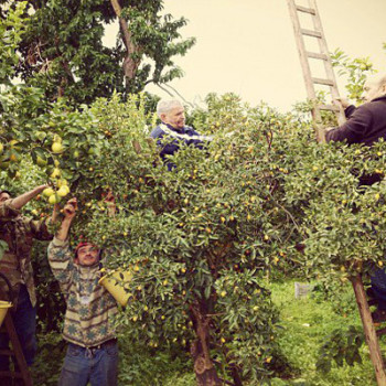 Agricontura: harvesting