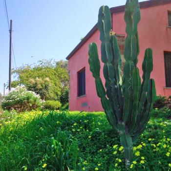 piante_sicilia_10